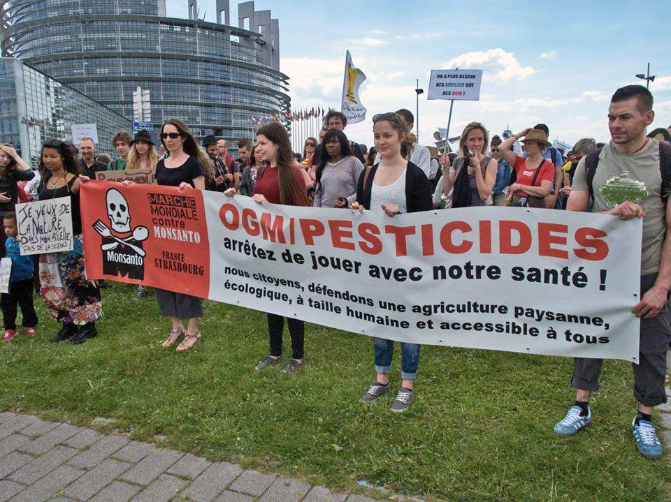 OGM_marche_contre_MONSANTO.jpg